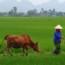 Một số hình ảnh tại quê nhà Việt Nam