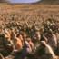 Chúa Giêsu hóa bánh nuôi 5000 người & bước đi trên mặt nước